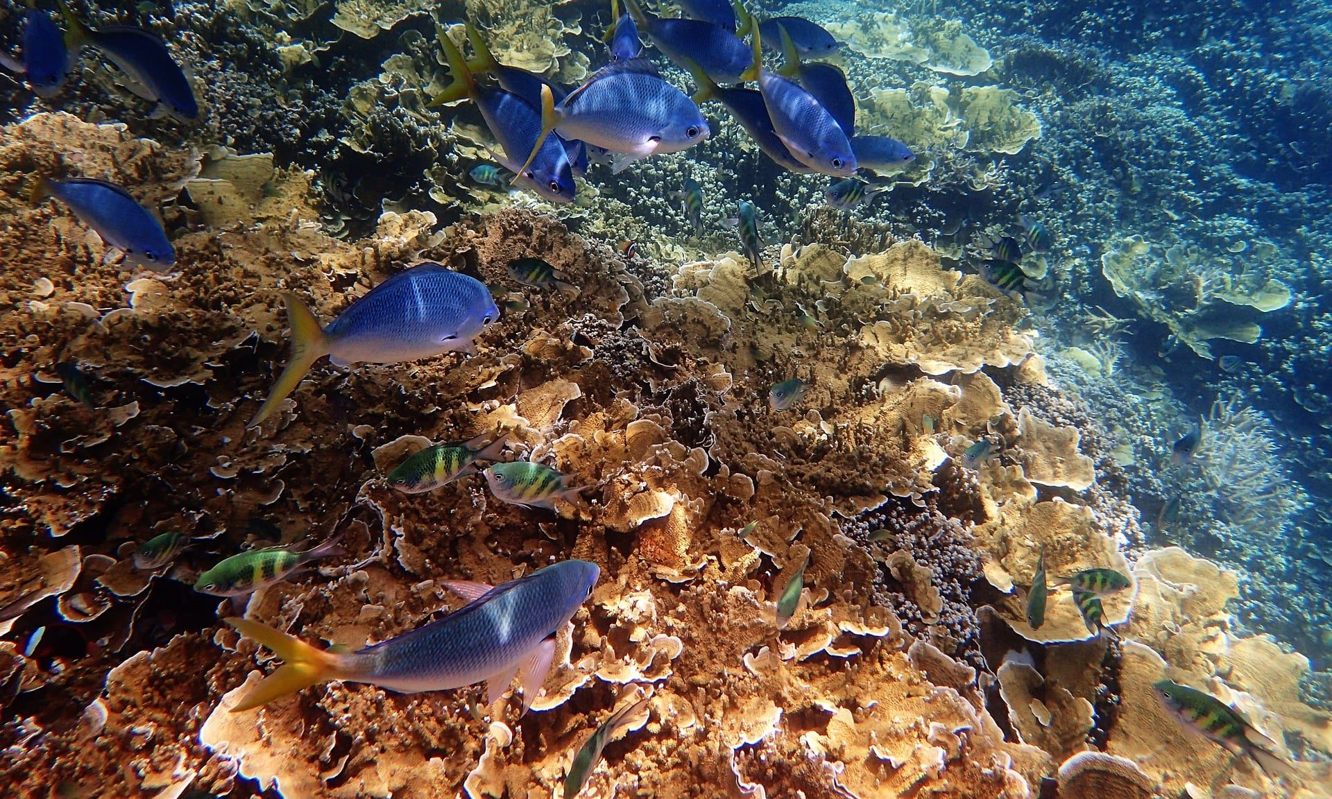 underwater at great bariier reef